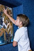 picture of starfish  - Young man pointing a starfish - JPG