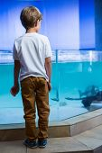 stock photo of manta ray  - Young man looking at manta ray in a tank at the aquarium - JPG
