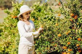 stock photo of mandarin orange  - Smiling caucasian girl in white tshort and hat harvesting mandarins and oranges in organic farm - JPG
