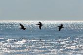 Three Ocean Birds