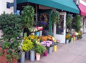 foto of flower shop  - flower store - JPG