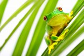 Small green frog sitting on palm tree