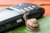 Snail On The Phone