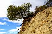 allein Baum auf dem Felsen, mediterranen Macchia. Erosion-Effekte