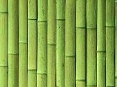 Textura de la pared de bambú verde