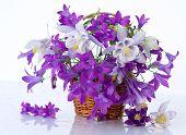 bouquet of flowers bells
