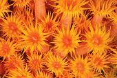 Detalhe de textura de corais de Copa