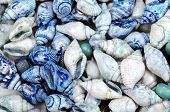 Abstract background from colorful sea shells
