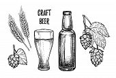 Hand Drawn Vector Illustration - Craft Beer (malt, Hop, Beer Glass, Bottle). Octoberfest Or Beer Fes poster