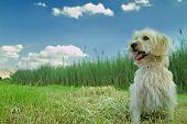 Inländische Hund Natur genießen