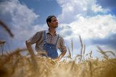 farmer standing in a wheat field