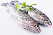 rainbow trout with herbs