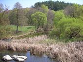 stock photo of boggy  - River In The Spring - JPG