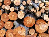 Firewood Sawn Stack. A Pile Of Chopped Wood. Firewood Preparation. poster