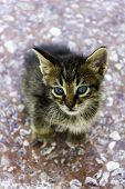 Kitten Sitting On Colorful Background Looking At Camera - Very Small Recently Born Kitten Still Blin poster