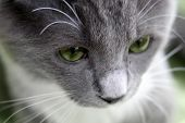 Sad Cat poster