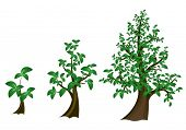 Vector green trees