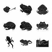 Vector Design Of Fauna And Reptile Logo. Set Of Fauna And Anuran Stock Symbol For Web. poster