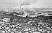 Central slaughterhouse in Chicago. Engraving by Maynar from picture by painter Taylor. Published in