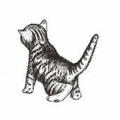 Kitten Hand Drawing Vector Illustration. Kitten Sketch. Curious Kitten poster