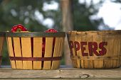 Bushel Basket Peppers