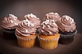 chocolate and vanilla cupcakes with cocoa frosting