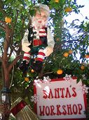 pic of  midget elves  - this is an elf sitting in an orange tree overlooking santa - JPG