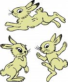 Funny Hares