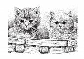 image of stippling  - Two cute kittens in a basket  - JPG