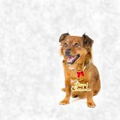 Happy dog with Merry Christmas sign on bokeh background