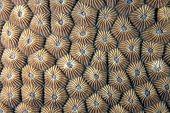 Stony coral