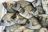 giltheads bream fish at the market