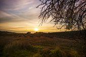 Autumn lavender field on sunset