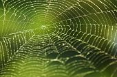 stock photo of spiderwebs  - Shining water drops on spiderweb over green forest background