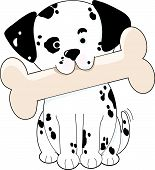 picture of puppy dog face  - Cute Dalmatian puppy holding a big bone in its mouth - JPG