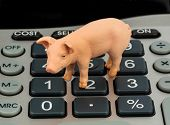 a pig and a calculator as a symbol photo for costs and income for a farmer in the landwirtschaft.ausgaben