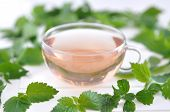 Herbal Tea in a Glass - stinging nettle (Urtica dioica) tea