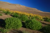 Slanted Dunes Sunflower Tumbleweeds