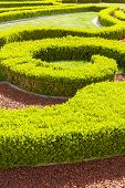 Baroque boxwood hedges.