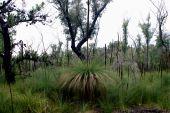 Australian Bush  Gippsland
