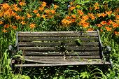 Orange Tiger Lilies And Old Wooden Bench