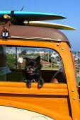 Woody Surfer Dog
