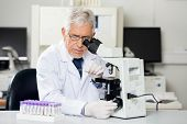Senior male researcher examining microscope slide in medical lab