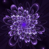 Beautiful Lush Violet Flower On Violet Background. Computer Gene