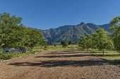 stock photo of south-western  - Garden with fruit trees in Swellendam area - JPG