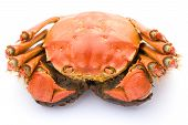 picture of cooked crab  - top view cooked crab on a white background - JPG