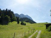 track through the alpine pasture
