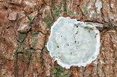 Bark Surface Texture Wood