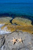Two Starfishes Next To Sea