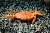 Crab isolated on a beach